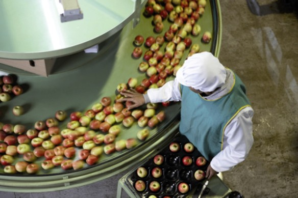 Food 2 apples, conveyor belt